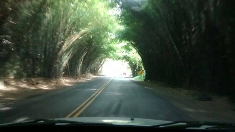 A estrada, com seu romântico túnel de bambus