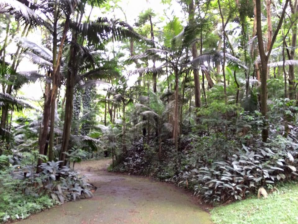 É possível fazer algumas pequenas trilhas em meio a muito verde, com diversas espécies diferentes de plantas