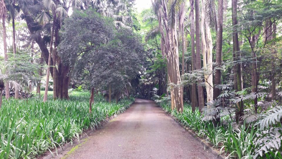 O quintal da casa é uma extensa área verde, que mais parece um parque