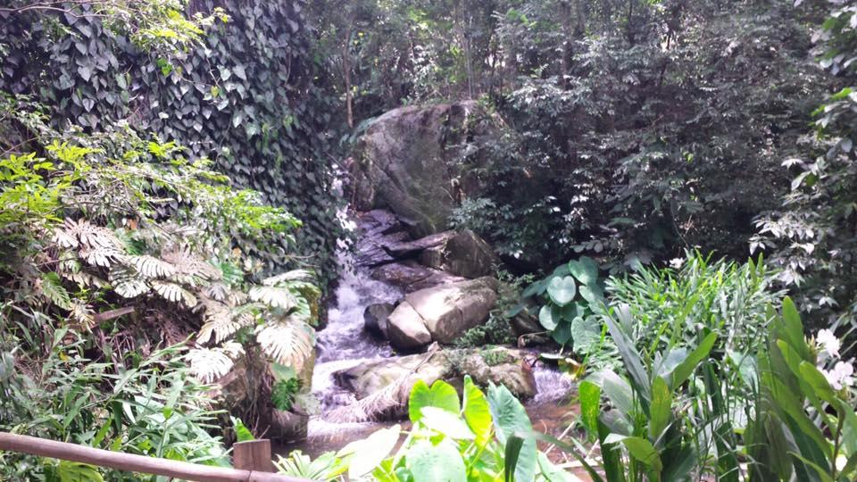 Muito verde e pequenas cachoeiras