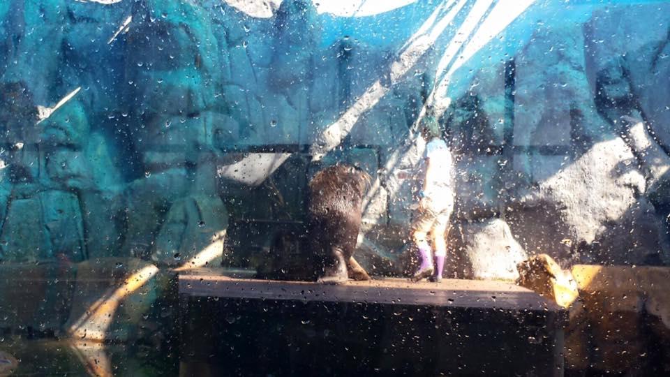 O show do leão marinho, a criançada adora!