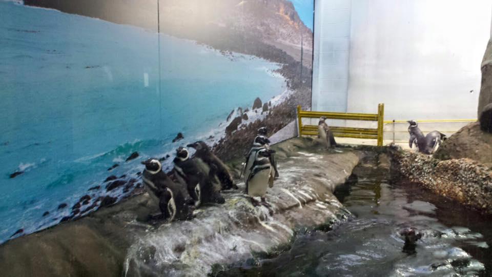 Fofíssimos pinguins
