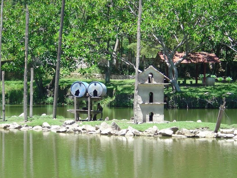 Vista da ilhota com os macaquinhos