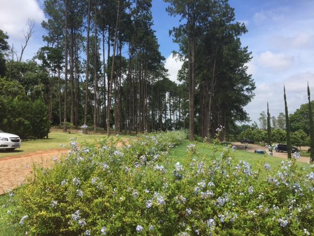 Muito verde nos jardins