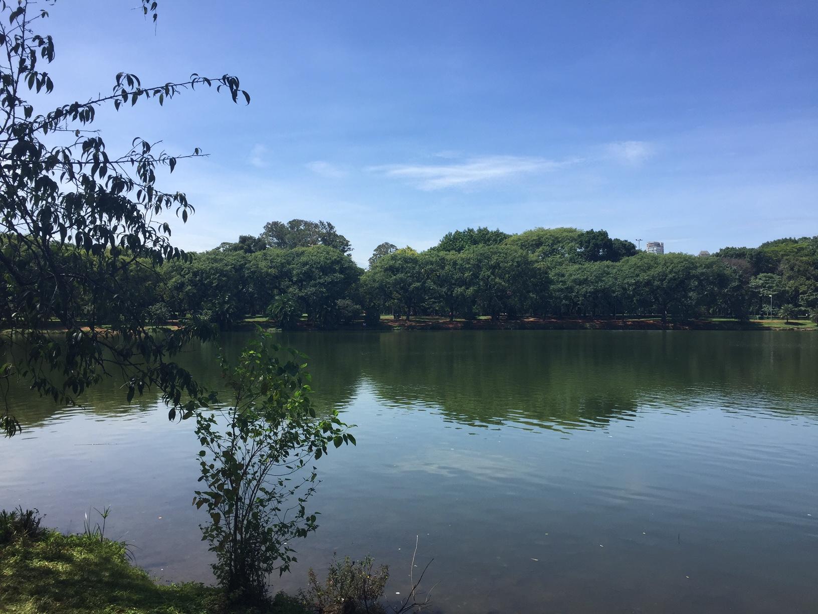 O parque do Ibirapuera é sempre uma ótima opção para relaxar e curtir o verde em meio a cidade