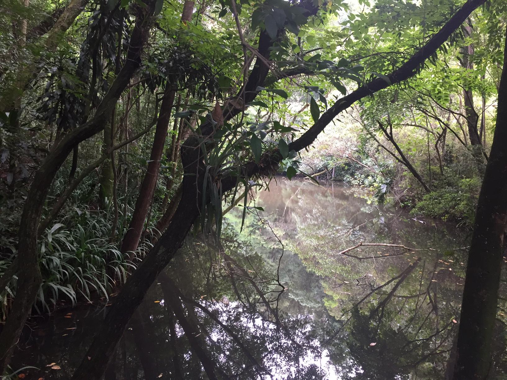 O local conta com lagos