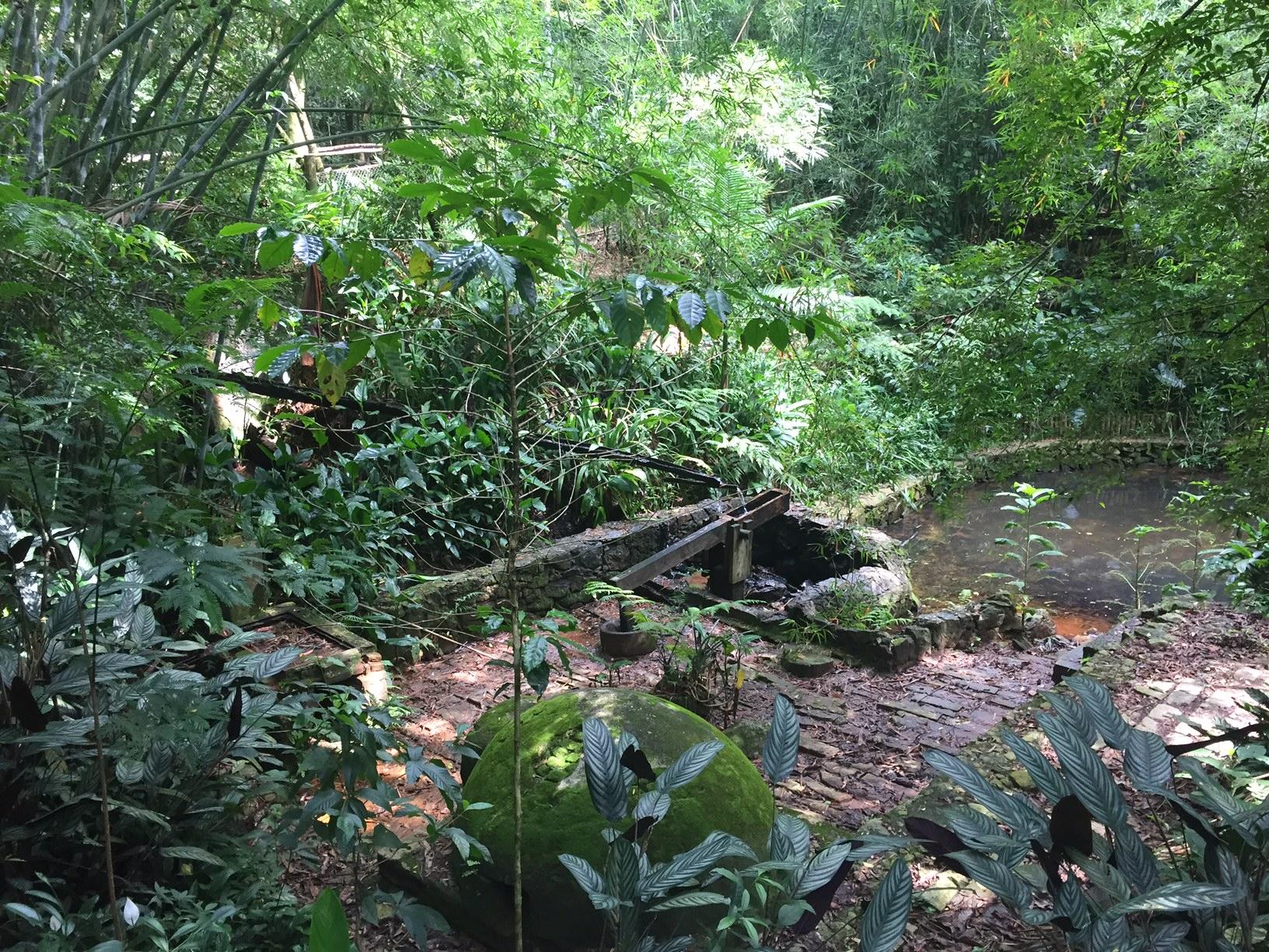 Mata nativa, com diversas espécies de plantas