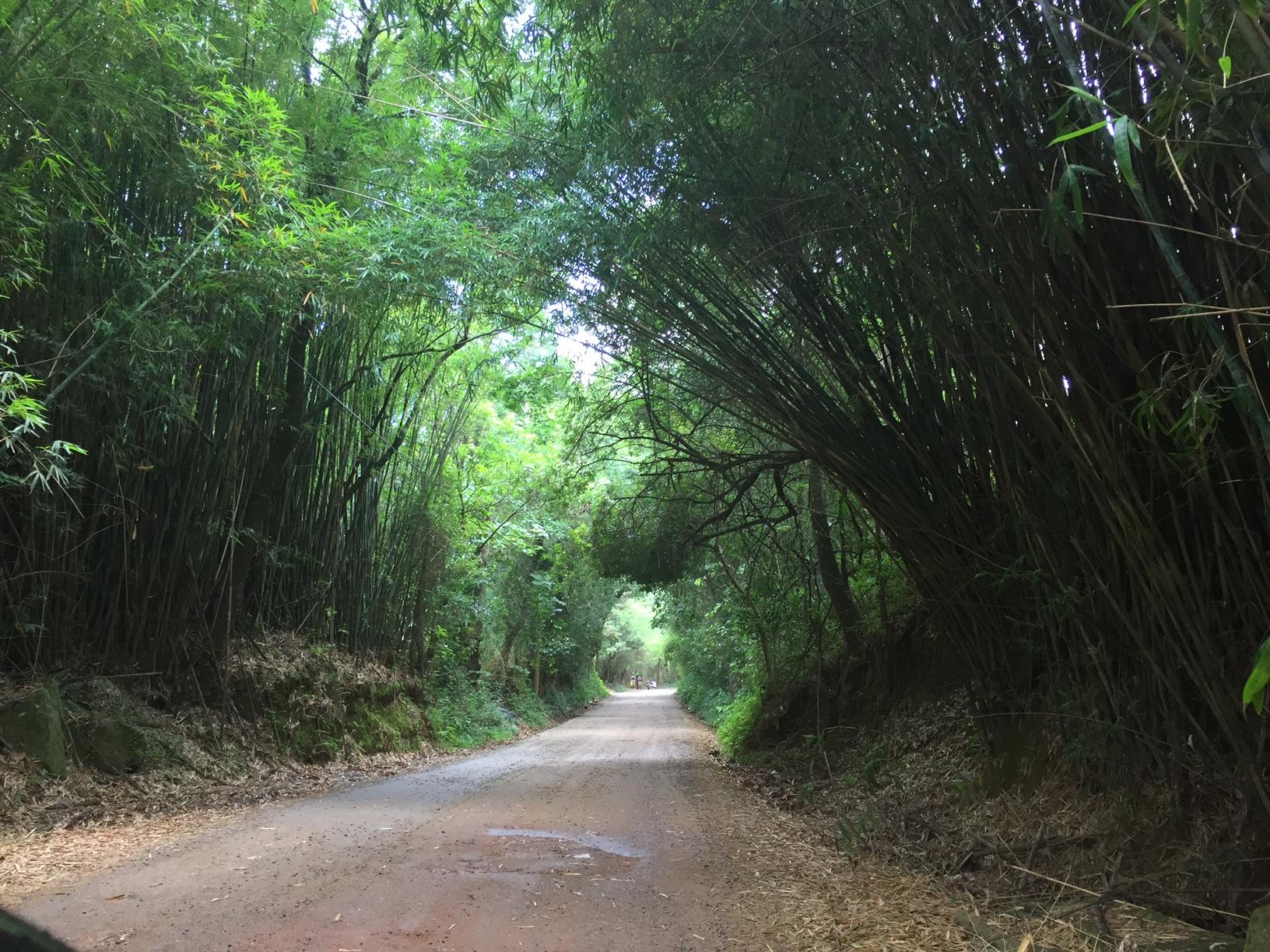 Estradinhas e trilhas com muito verde!