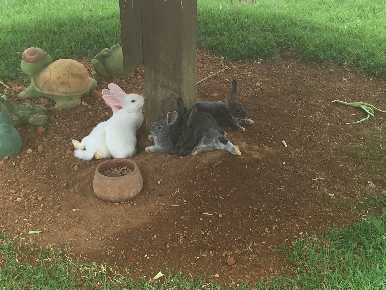 Os coelhinhos são uma graça